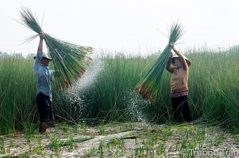 Green Grass Straws by Zero Waste Saigon – Green Grass Straws